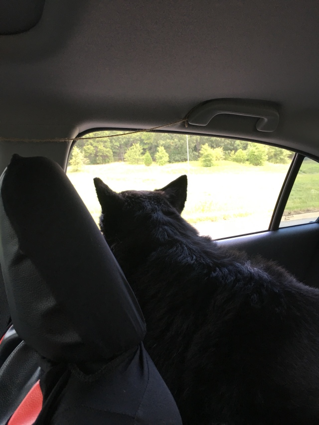 Dog car ride